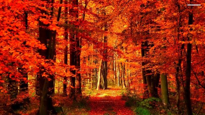 orange-forest-wallpaper-3